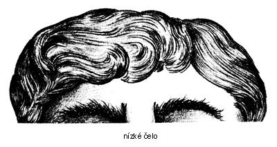 n%C3%ADzk%C3%A9 %C4%8Delo s - Pět nejčastějších tvarů čela odkrývá osobnost - 2