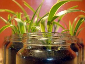 zelenec - Deset rostlin do ložnice pro lepší spánek
