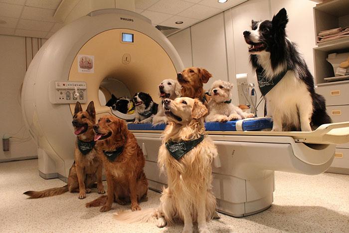 pes05 - Psi nám rozumí lépe, než jsme si mysleli