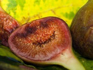 ad36ba5f678b8762b9a7a3dcb491d564 326x245 - Plodiny odpovídají tvarem našim orgánům 3