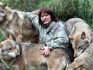 53f73f8cd837c4922480e434a19cfb7d 326x245 - Žije s vlky. Povídá si a cítí s nimi. Tanja Askani