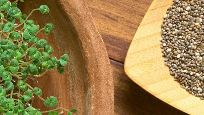 Naklíčená chia semínka jsou mnohem výživnější.