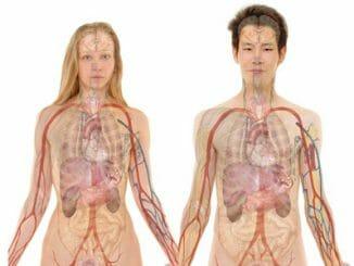 82721a755e40874d592efa81e0f985c4 326x245 - Tenké střevo - anatomický popis a funkce orgánu