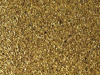 6d9bbede62245002f4ea243e55b3094d 326x245 - Quinoa je pro bezlepkáře nejvýživnější