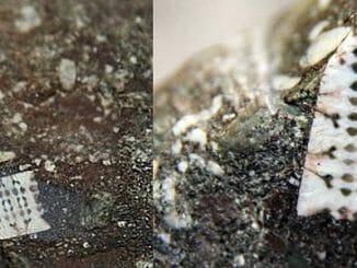 3b66becd03c5d44332a1709619f9b431 326x245 - V Rusku se našel 250 milionů let starý mikročip