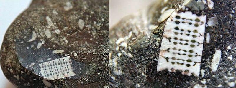 3b66becd03c5d44332a1709619f9b431 - V Rusku se našel 250 milionů let starý mikročip