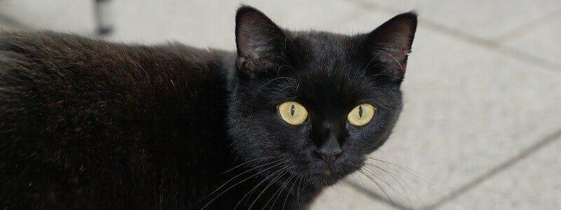 1fc82c0cb0988fc7e3048ab7b6b5ffff - Kočky chrání před negativní energií