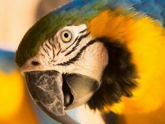 8808983c4c9a3502eaa3a04c6ef4bb4b 326x245 - Papoušci nejsou žádné ptačí mozky