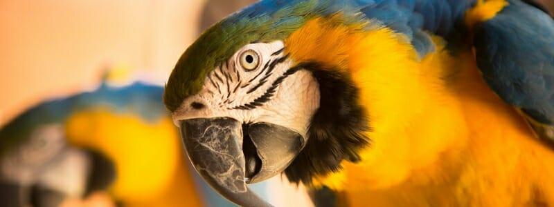 8808983c4c9a3502eaa3a04c6ef4bb4b - Papoušci nejsou žádné ptačí mozky