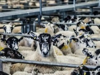 964587ec090246e417bdddd1d72cb43b 326x245 - Karnismus je důvodem, proč lidé jedí maso?