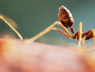 641f4e1d8d872bbc2e92535f87a195cf 326x245 - Vyzkoušejte přírodní bič na domácí mravence