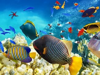 05cb60b24078bfec45a2fa3122560b09 326x245 - Bajka na téma Proč se ryba stala rybou