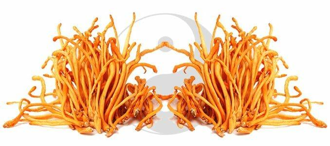 Cordyceps obnoví ztracenou životní sílu.