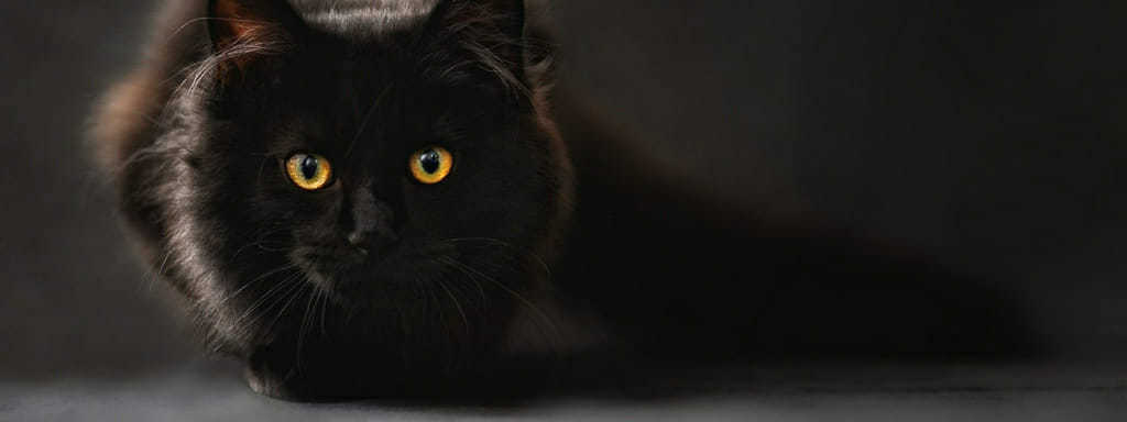 Kočičí parazit může pomoci vašemu podnikatelskému mozku.