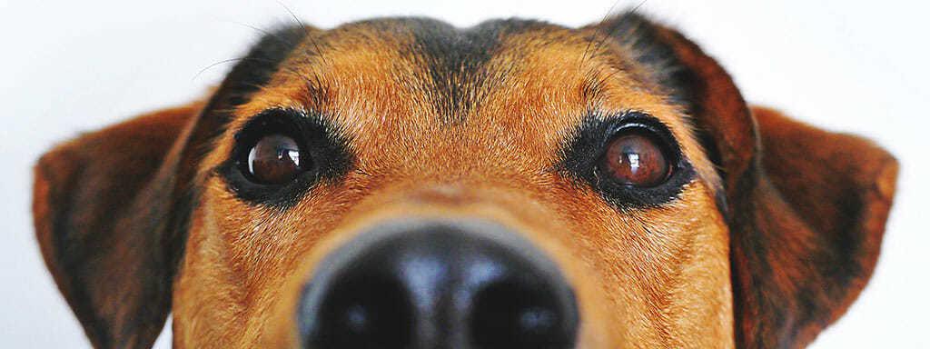 Psi poznají zlé lidi, a to velmi spolehlivě.