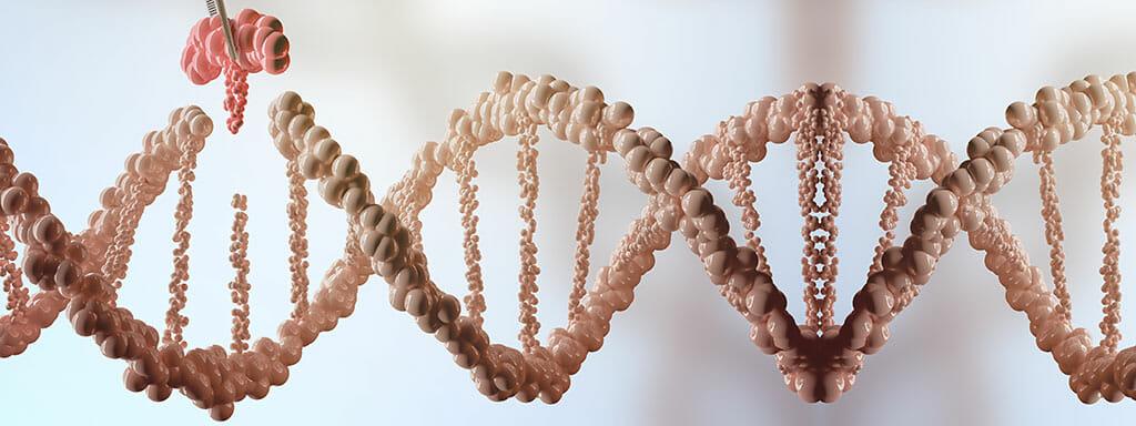 Aktivace DNA závisí na tom, co jíme.