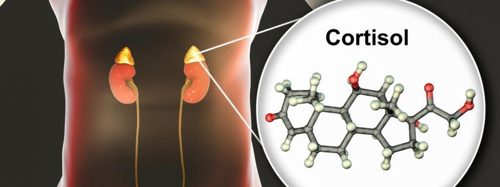 Jak snížit hladinu kortizolu na optimální hodnoty. Co zabírá na stresový hormon kortizol.