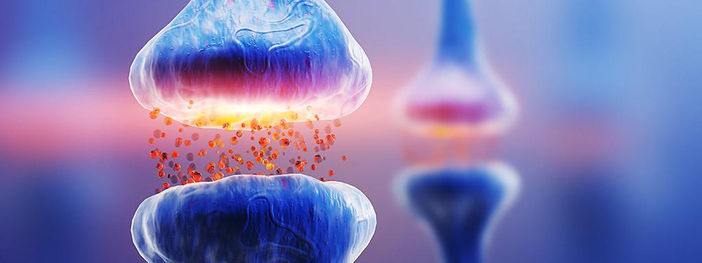 Neurony v mozku vydávají pod mikroskopem své tajemství.